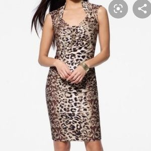 NWOT Caché animal print ruched dress w gold chain